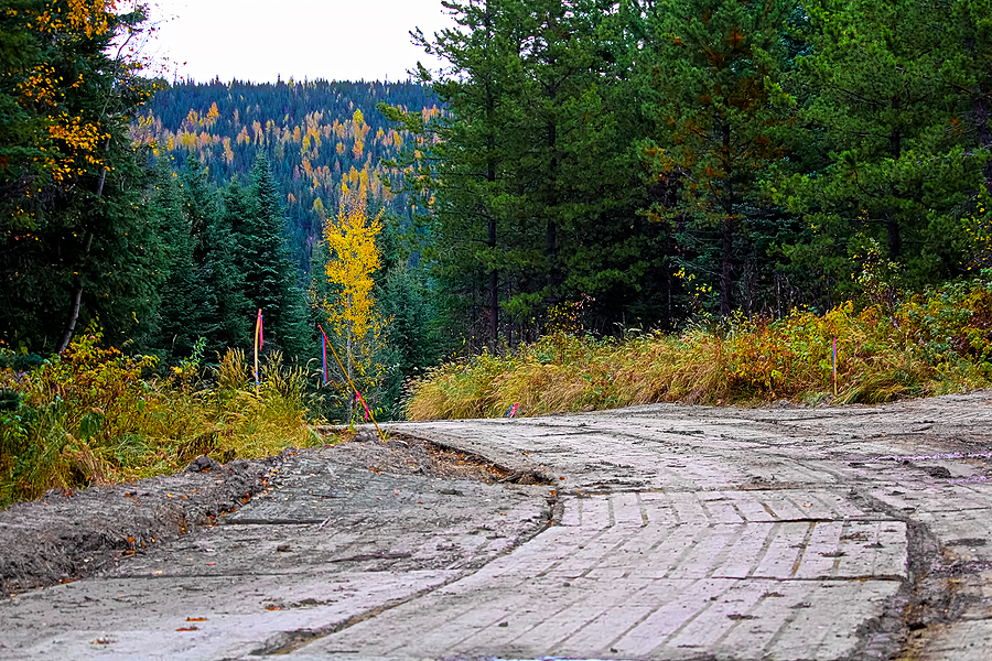 A temporary road matting through a forest